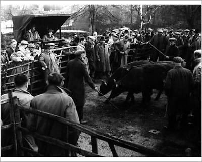 """10""""x8"""" (25x20cm) Print of MAIDSTONE CATTLE MARKET from Prints Online"""