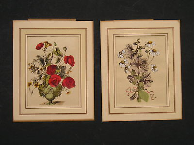 Antique Vintage Pair of Small Floral Prints Hand Colored Daisies and Poppies ?