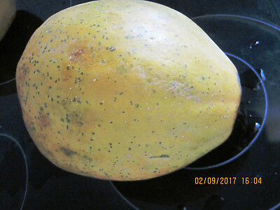 RED PAWPAW Carica papaya Self Pollinating VERY sweet , ORGANIC 80 FRESH Seeds