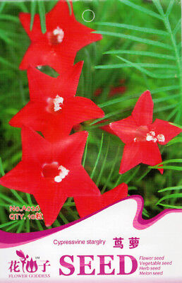10 Seeds/Pack Red Cypress Vine Seed Quamoclit Pennata Original Package A026