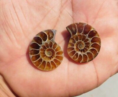 72.2 Cts 100% Natural Antique Ammonite Mix  Loose Cabochon  Gemstone