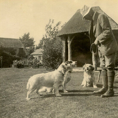 1920s MAN WITH THREE CLUMBER SPANIELS DOG PORTRAIT SNAPSHOT PHOTO VINTAGE GUNDOG