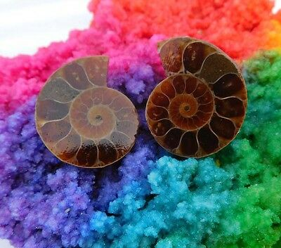 59 Cts. 100% Natural Matched Pair Of Ammonite Shell  Mineral Specimen (NH117)