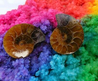 50 Cts. 100% Natural Matched Pair Of Ammonite Shell  Mineral Specimen (NH131)