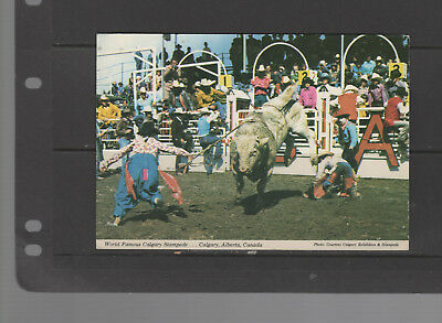 POST CARD  Rodeo CLOWNS Calgary Stampede Bullriding 1976