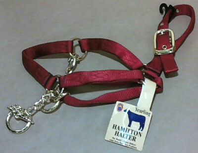 NEW Hamilton Single Thick 1-Inch Yearling Control Halter with Chain, Red 31CY RD