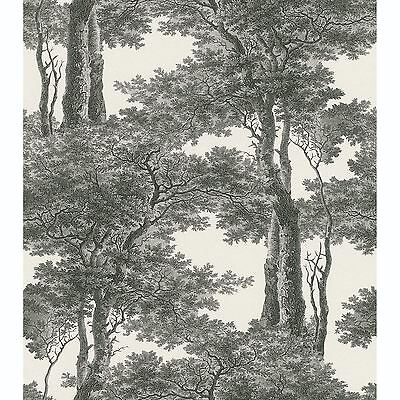 Passepartout Trees Wallpaper Black / White - Rasch 605419