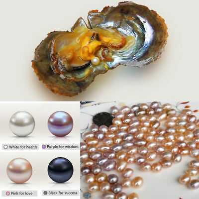 10Piece Individually Fresh Water Wrapped Akoya Oysters With Large Pearls 7-8MM