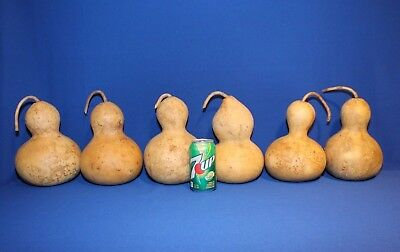 Lot of 6 Bottle/Birdhouse Gourds - Medium Sized, Dried & Cleaned