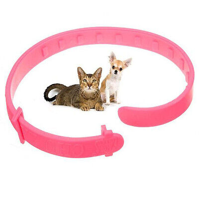 2XAdjustable Pet Collar Anti Flea & Tick Mite Louse Remedy Neck Ring For Cat WH