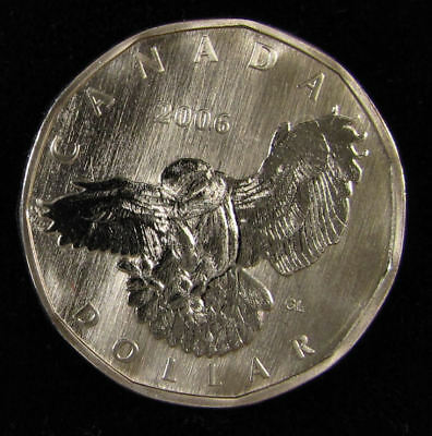 2006 Specimen $1 Snowy Owl Canada loonie one dollar  come from set