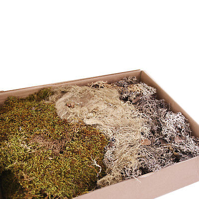 Moss 500g Mixed Box Dried for Craft and Floristry