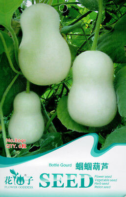 6 Seeds/Pack White Jade Bottle Gourd Seed Calabash Organic Original Pack B091