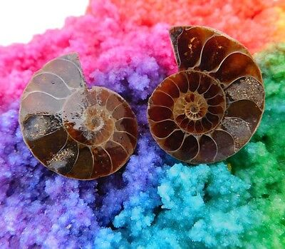 57 Cts. 100% Natural Matched Pair Of Ammonite Shell  Mineral Specimen (NH113)