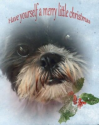 Shih Tzu Christmas Cards  Hope You Have A Cozy Christmas! Package Of Six