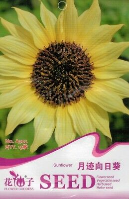 15 Pcs Monthly Sunflower Seeds Helianthus Annus Beautiful Flowers Seeds A302