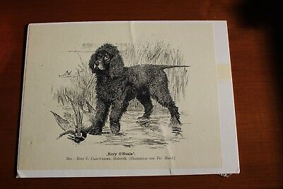 Irish Water Spaniel print