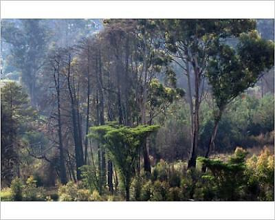 """10""""x8"""" (25x20cm) Print of Nyanga Forest - Zimbabwe from Prints Online"""
