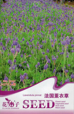 15 Seeds/Pack French Lavender Seed Lavendula Herb Plant Seed Original Pack D051