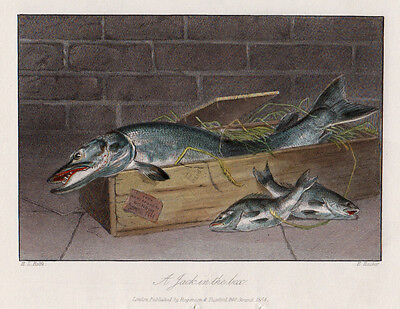 A Jack in the Box Original Stahlstich1864 Angeln Fishing Fisch Fish