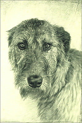 Irish Wolfhound Dog 1935 by Malcolm Nicholson  ~ LARGE New Blank Note Cards