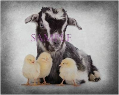 Goat And Chicks Cute Farm Animals Portrait 16X20 Graphic Art Wall Poster