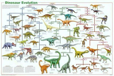 Dinosaur Evolution Educational Science Chart Poster 36 x 24in