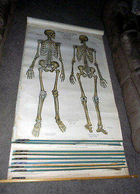 Antique A.J. Nystrom Frohse Medical Anatomical Illustration Plates 1-10