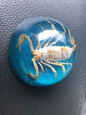 Vintage Small Paperweight With Real Scorpion Blue Sparkle Novelty