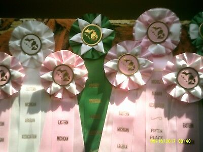 Lot Of 9  Horse Show Ribbons,  Michigan Arabian Shows.