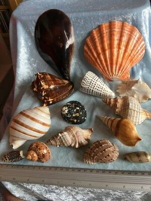 Great Collection Of Sea Shells
