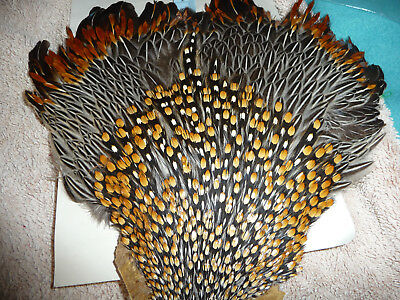 1 x LARGE JUNGLE COCK CAPE FLY TYING CRAFT FEATHERS #45