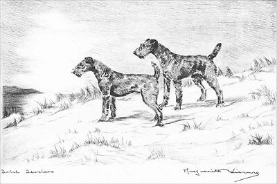 Irish Terrier Dogs 1924 Marguerite Kirmse  8 LARGE New Blank Note Cards