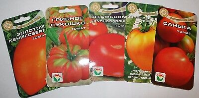 100 Seeds SORT Tomato  from Russian (No GMO)