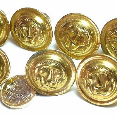 Set X 8 Vintage Brass Lion Head Chest Drawers Small Knob Handles Regency Style