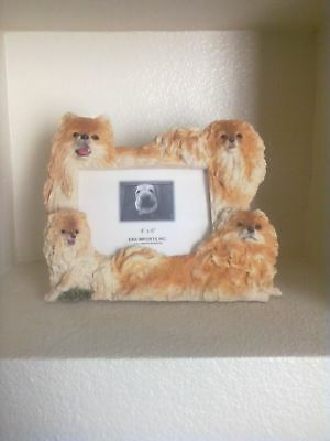 Pomeranian 4x6 Picture Frame Clearance Last One
