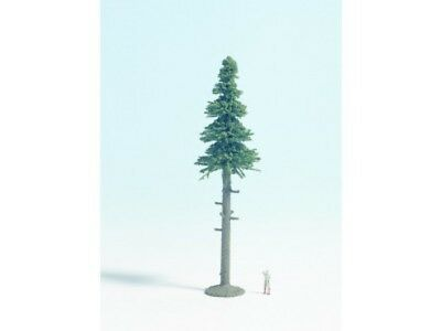 NOCH - NN28435 (d) NN28435 - Tall Fir Tree 11cm