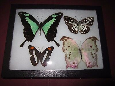 """4 real framed mounted colorful rainbow butterflies in 6x8"""" riker mount #pl14."""