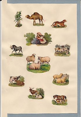 Collage di figure in cromolitografia - periodo inizio 1900 - Animali --