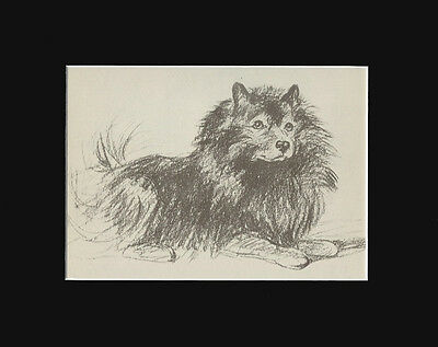 Dog Print Keeshond Dog 1940 Sketch by Lucy Dawaon 8X10 VINTAGE