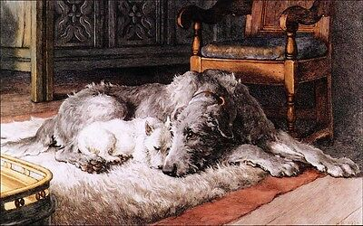 Scottish Deerhound & West Highland Terrier Dogs  ~ LARGE New Blank Note Cards