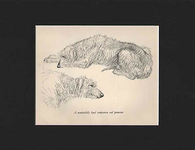 Vintage Scottish Deerhound Dog Large Print 1938 by K.F. Barker Matted 10 x 13