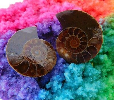 64 Cts. 100% Natural Matched Pair Of Ammonite Shell  Mineral Specimen (NH90)