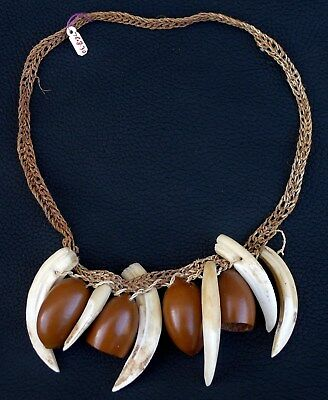 Huaorani Indian Tribe ECUADOR Peccary Tusk Seed Pod Necklace Amazon Rain Forest