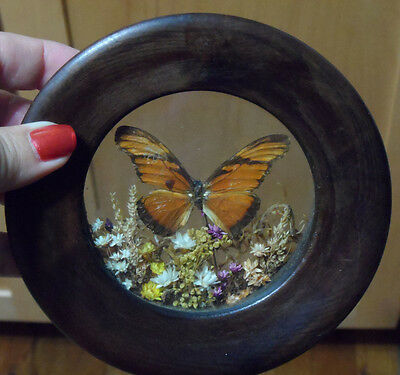 Vintage Taxidermy Dried Butterfly & Flowers Framed Under Glass Plaque Art Decor