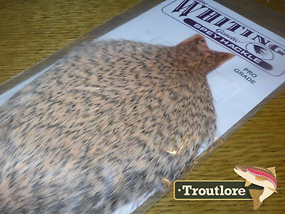 Whiting Farms Grizzly Salmon Spey Hackle Rooster Cape Whole New Tying Neck