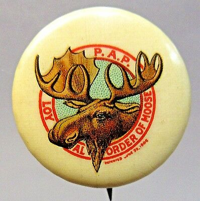 circa 1910 MOOSE P.A.P. Fraternal pinback button  white background +