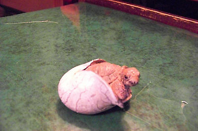 "BrownTurtle Tortoise hatching from Grey egg figurine 1 1/4"" tall"