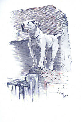 Bull Terrier Dog by Cecil Aldin 1930 8 New Large Note Cards CRACKERS ON THE WALL
