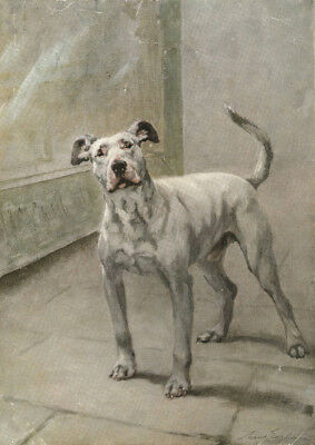 Bull Terrier Dog 1909 by Artist Maud Earl   8 New Large Note Cards